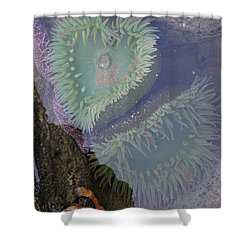 Heart Of The Tide Pool Shower Curtain by Mick Anderson