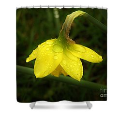 Shower Curtain featuring the photograph Heavy With Water by Sherman Perry