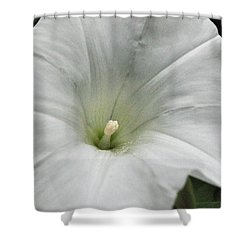 Shower Curtain featuring the photograph Hedge Morning Glory by Tikvah's Hope