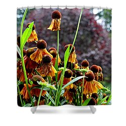 Helenium Sneezeweed  Shower Curtain