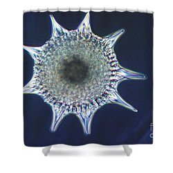 Heliodiscus Sp. Radiolarian Lm Shower Curtain by Eric V. Grave