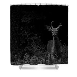 Hello Deer Shower Curtain by Cheryl Baxter