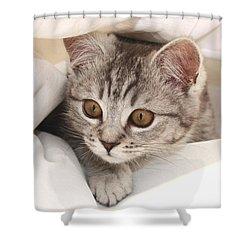 Hello Kitten Shower Curtain by Claudia Moeckel