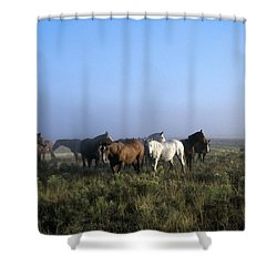 Herd Of Horses And Cowboy On Horseback Shower Curtain by Natural Selection Craig Tuttle