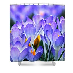 Here Come The Croci Shower Curtain by Byron Varvarigos