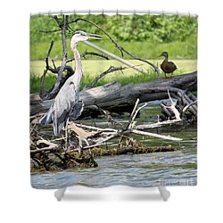 Shower Curtain featuring the photograph Heron And Mallard by Debbie Hart