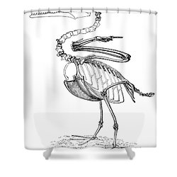 Hesperornis Shower Curtain by Science Source