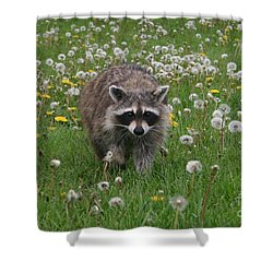 Hey What You Got There Shower Curtain by Alyce Taylor