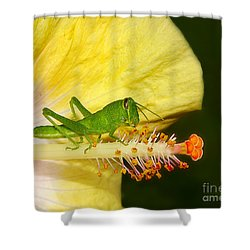 Hibiscus Lunch With Grasshopper Shower Curtain