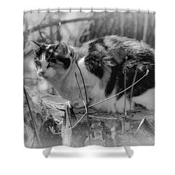 Hiding Shower Curtain by Eunice Gibb