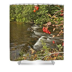 High Bush Cranberry 7823 Shower Curtain by Michael Peychich