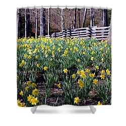 Hills Of Daffodils Shower Curtain