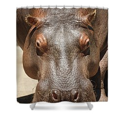Hippopotamus Shower Curtain by Ernie Echols