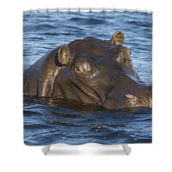 Hippopotamus Hippopotamus Amphibius Shower Curtain by Suzi Eszterhas
