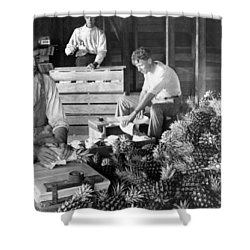 Historic Pineapple Factory - Florida - C 1906 Shower Curtain by International  Images