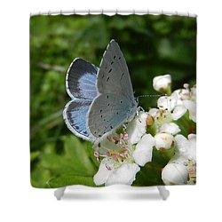 Holly Blue Shower Curtain
