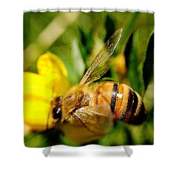 Shower Curtain featuring the photograph Honey Bee by Chriss Pagani