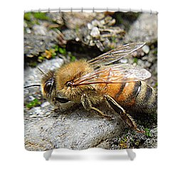 Shower Curtain featuring the photograph Honey Bee On Rocks by Renee Trenholm
