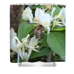 Shower Curtain featuring the photograph Honeybee Collecting Pollen by Renee Trenholm