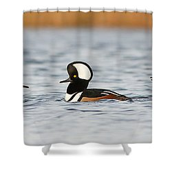 Hooded Mergansers Shower Curtain