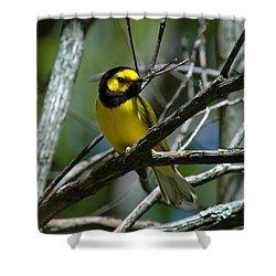 Hooded Warbler Dsb166  Shower Curtain by Gerry Gantt