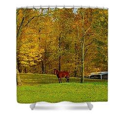 Horse In Autumn Shower Curtain by Kathleen Struckle