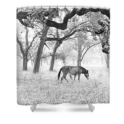 Horse In Foggy Field Of Oaks Shower Curtain by CML Brown
