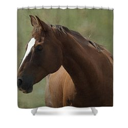 Horse Painterly Shower Curtain by Ernie Echols