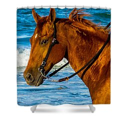 Horse Portrait  Shower Curtain by Shannon Harrington
