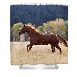 Horse Running Shower Curtain by Alan and Sandy Carey and Photo Researchers