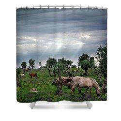 Horses Eating Shower Curtain by Carlos Caetano