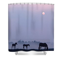 Horses In Kentucky Shower Curtain by Frederica Georgia and Photo Researchers