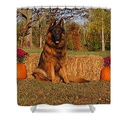 Hoss In Autumn II Shower Curtain by Sandy Keeton