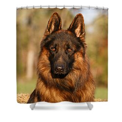 Hoss In Autumn Shower Curtain by Sandy Keeton
