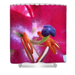 Shower Curtain featuring the photograph Hot Pink Lilly Up Close by Kym Backland