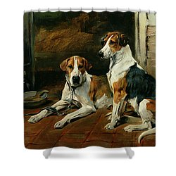 Hounds In A Stable Interior Shower Curtain by John Emms