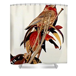 Shower Curtain featuring the photograph House Finch Perch by Elizabeth Winter