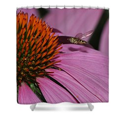 Hoverfly Hovering Over Cornflower Shower Curtain