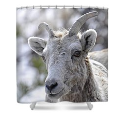 How Close Is Too Close Shower Curtain by Dorrene BrownButterfield