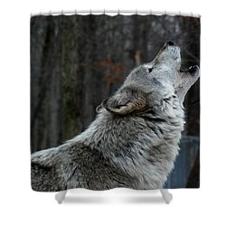 Howling Tundra Wolf Shower Curtain by Richard Bryce and Family