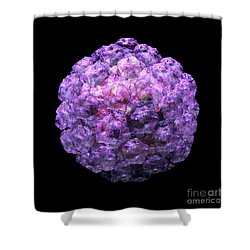 Human Papilloma Virus  10 Shower Curtain