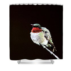 Hummingbird - Ruffled Feathers Shower Curtain