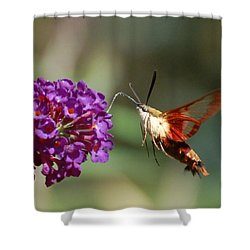 Hummingbird Moth Shower Curtain by Randy J Heath