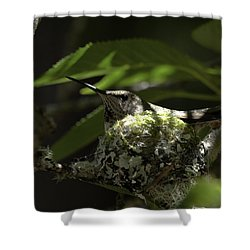 Shower Curtain featuring the photograph Hummingbird On Nest by Betty Depee