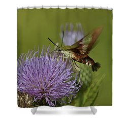 Hummingbird Or Clearwing Moth Din178 Shower Curtain by Gerry Gantt