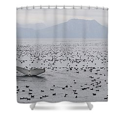 Humpback Whale Diving Amid Seabirds Shower Curtain by Flip Nicklin