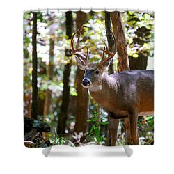 Shower Curtain featuring the photograph Hunters Dream 10 Point Buck by Peggy Franz