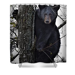 Hunting Berries Shower Curtain