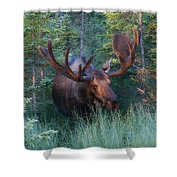 Shower Curtain featuring the photograph Hunting Some Munchies by Doug Lloyd
