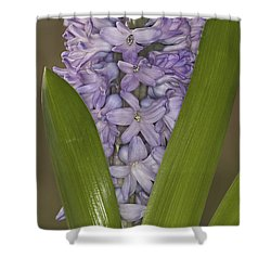 Hyacinth In Full Bloom Shower Curtain